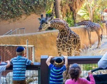 Yeshiva Ketana celebrates Parshas Noach at the LA Zoo