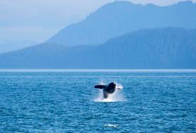 Animals of Alaska 2