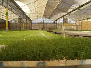 2 A greenhouse in Gush Katif