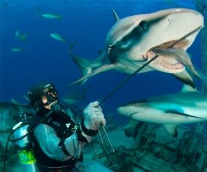 Stuart Cove's Dive